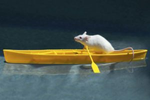Ahab the Mariner Mouse
