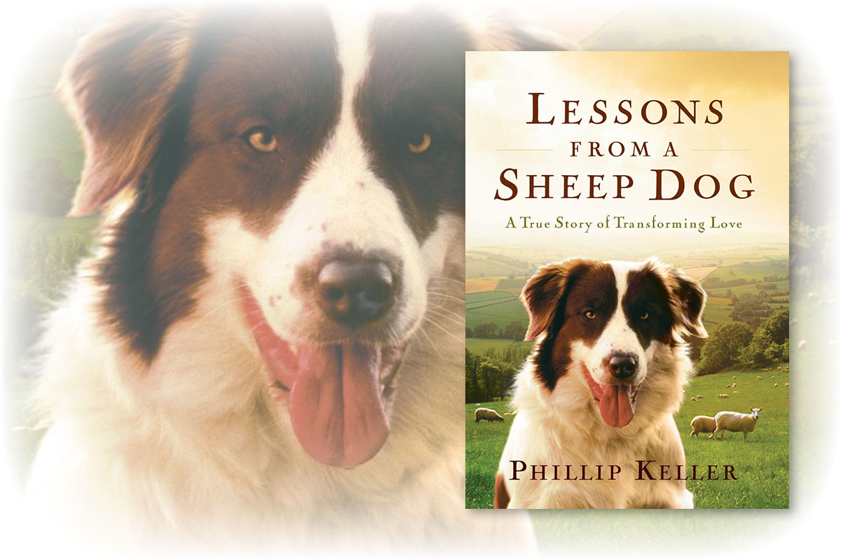 Book Review - Lessons from a Sheep Dog