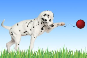 Faith and Dalmations: How I Learned to Believe God