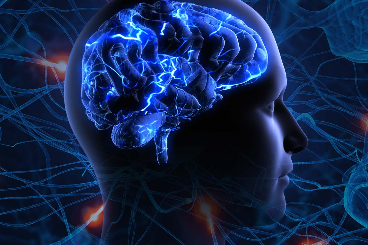 Homosexuality and the Brain