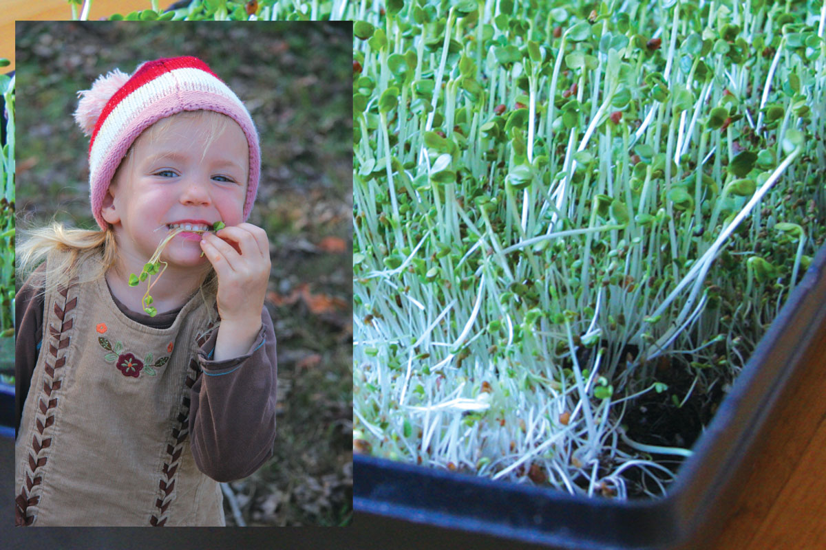 Happy little girl snacking on sprouts in December